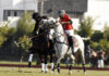 Corps Commander Diamond Paints Polo Cup